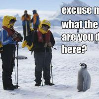 Neal4Gold's picture