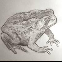 THE_TOAD