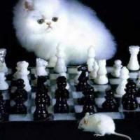 cat_of_chess