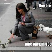 The_Evil_Ducklings