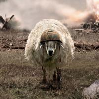 Sheep_Mode