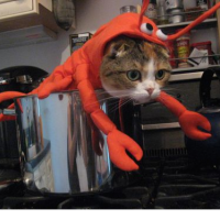 killercrab