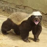 HoneyBadger