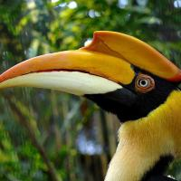 hornbill's picture