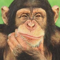 Chimp-anzee's picture