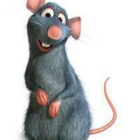 Rat_Junior