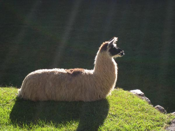 kenthewonderllama