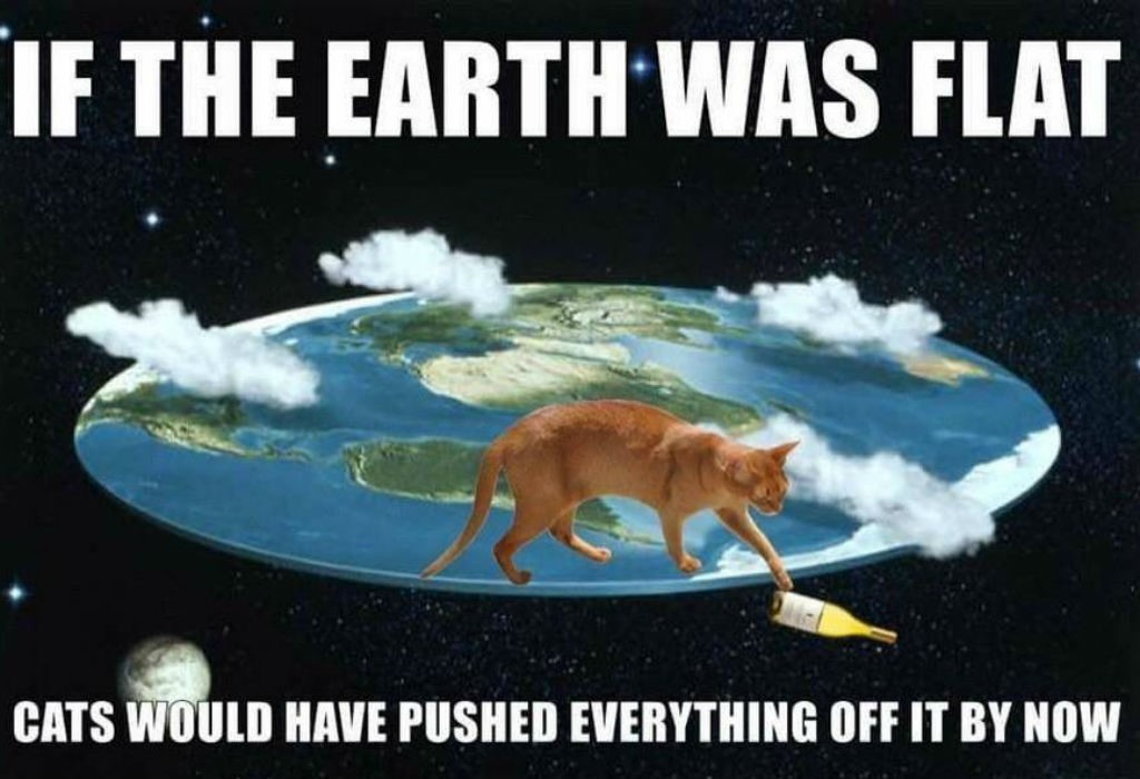 Funny cat memes ile ilgili görsel sonucu