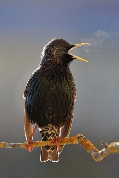 عکس حیوانات و پرندگان زیبا