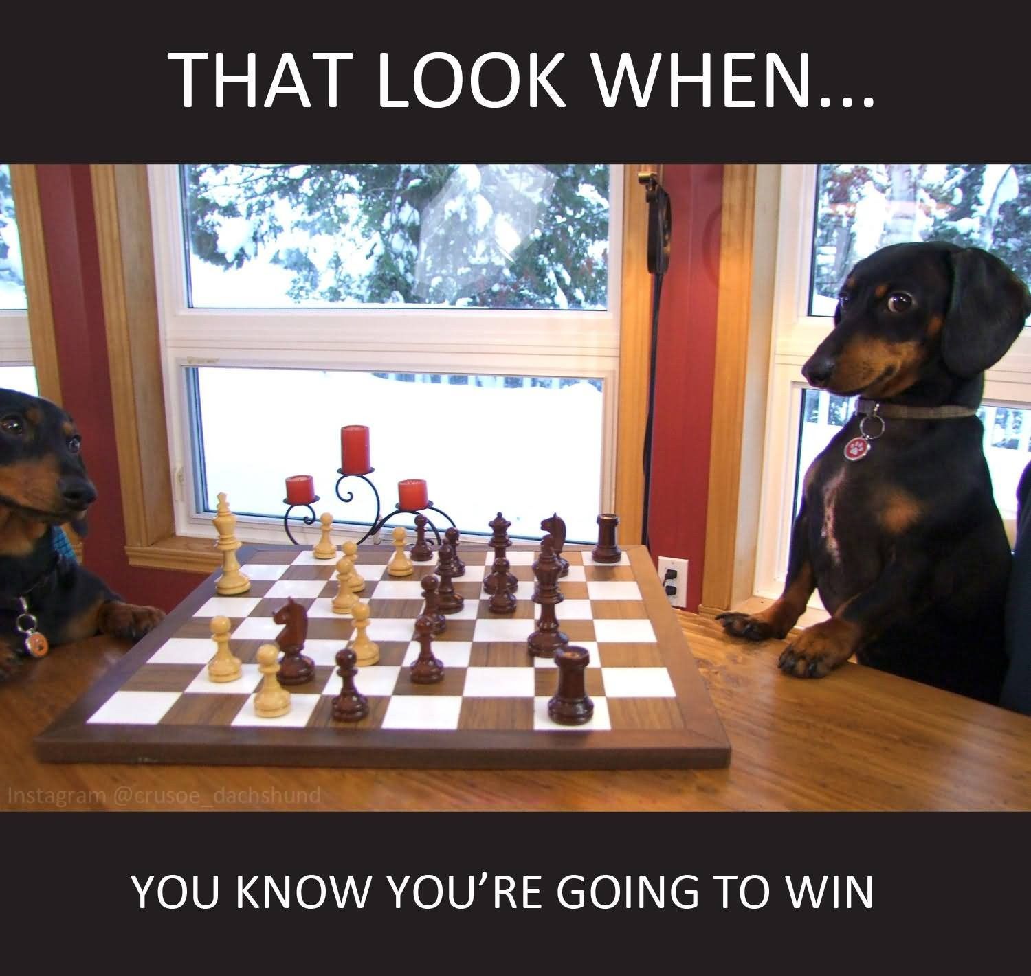 50 Very Funny Chess Meme Photos And Pictures That Will Make You Laugh