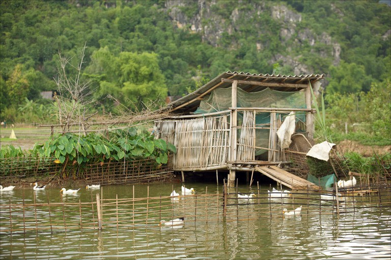 http://www.mccullagh.org/db9/vietnam/ducks-mai-chau.jpg