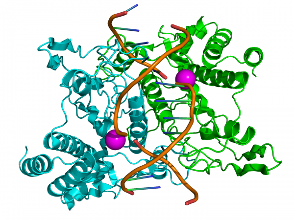 endonuclease