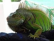 lizard1's picture