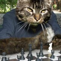 ChessCat9's picture
