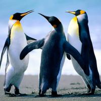 The_Three_Penguins