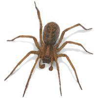 HoboSpider's picture