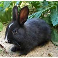blackrabbitto's picture