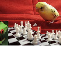 Pippychess's picture