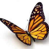 The Butterfly Effect, Part 2
