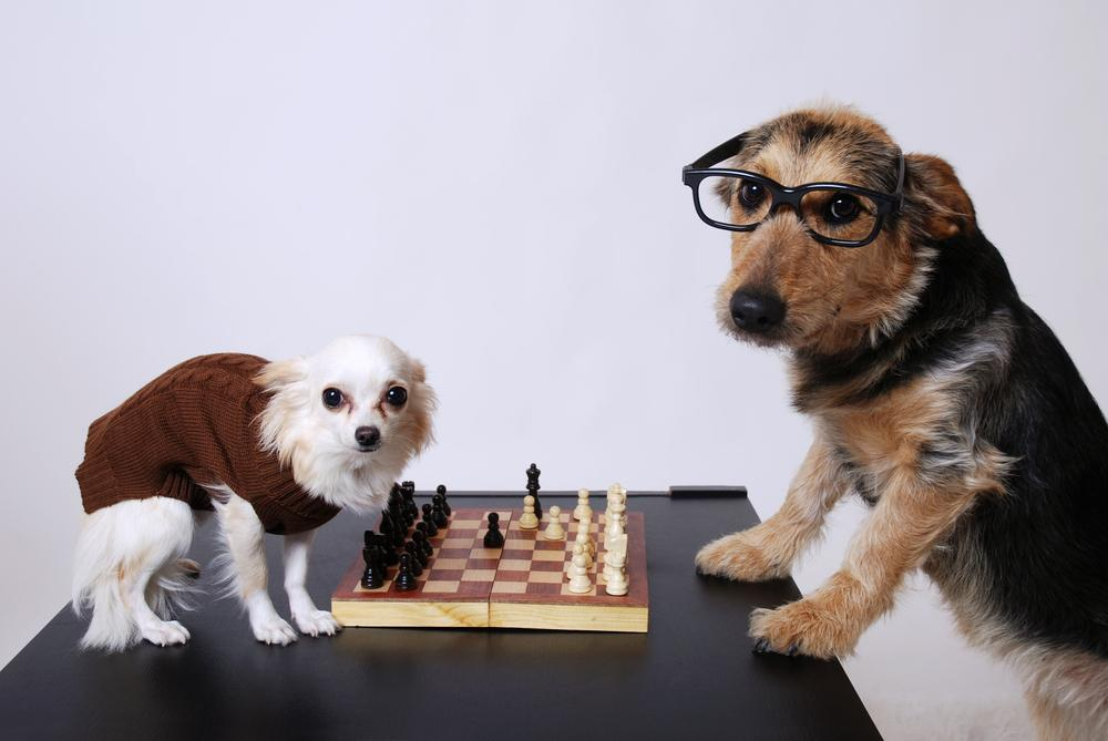 Play Chess Online With Your Pets