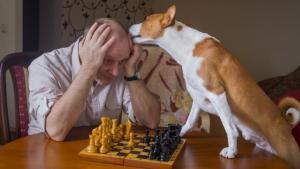 Bist Du ein guter Schachspieler?