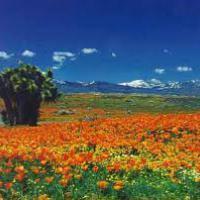 Antelope Valley Masters U1600