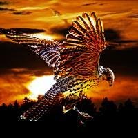 GM Falk(e)o(Hawk)