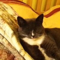 My Cat, Michelle