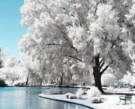 Dimri në Liqen