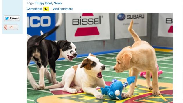 Puppy Bowl IX!
