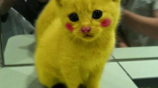 Pokemon meow
