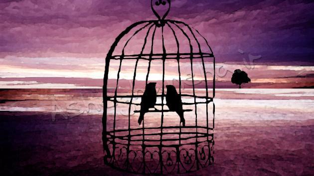 من و تو دو تا پرنده