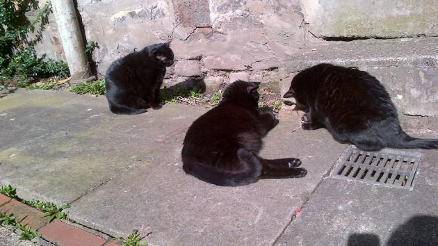 Cats and Tats