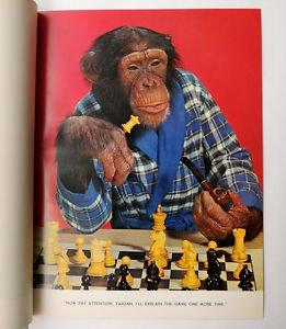 CHESS MONKEYS