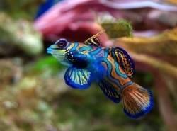 Mini Reef Aquarium - New Build
