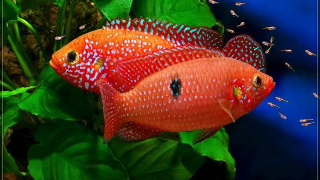Aquarium Update 22-03-2014