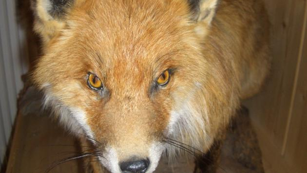 Fox Blog