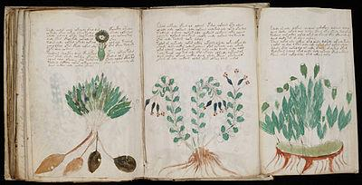 Voynich manuscript/Are you be able to translate for me
