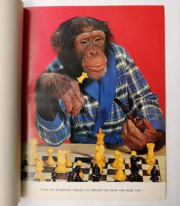 Monkey chess on Chess.com.