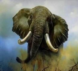 La Danza del Elefante ¡ Increible !