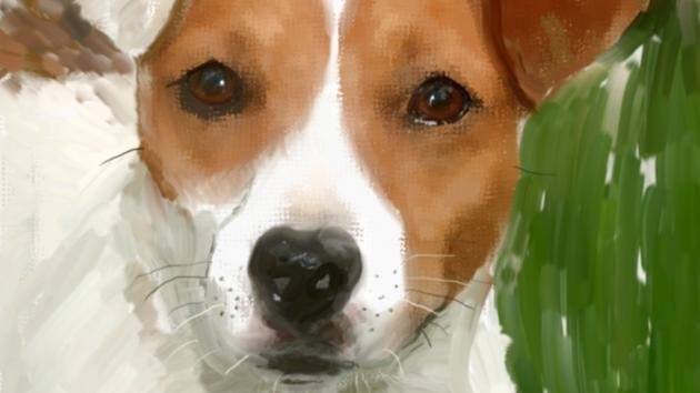 Study of a Jack Russell