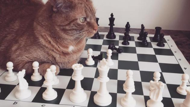 Pets And Chess -- Submit Your Photo!