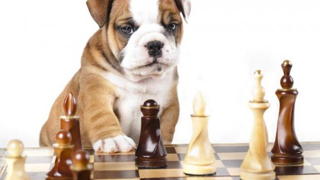 Chess And Pets: GM Sergey Shipov