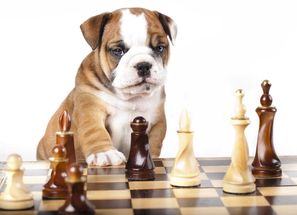 Chess And Pets: GM Sergey Shipov