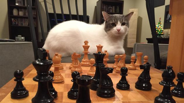 How to win at Copy Cat Chess