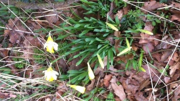 Photo of Spring signs