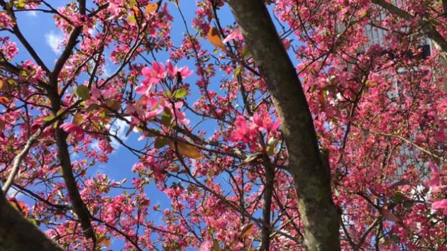 Blossoms today, cranks tomorrow