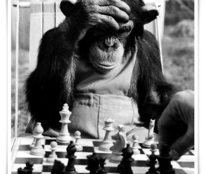 I am a cheater monkey