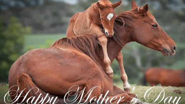 * * Mother's Love * *