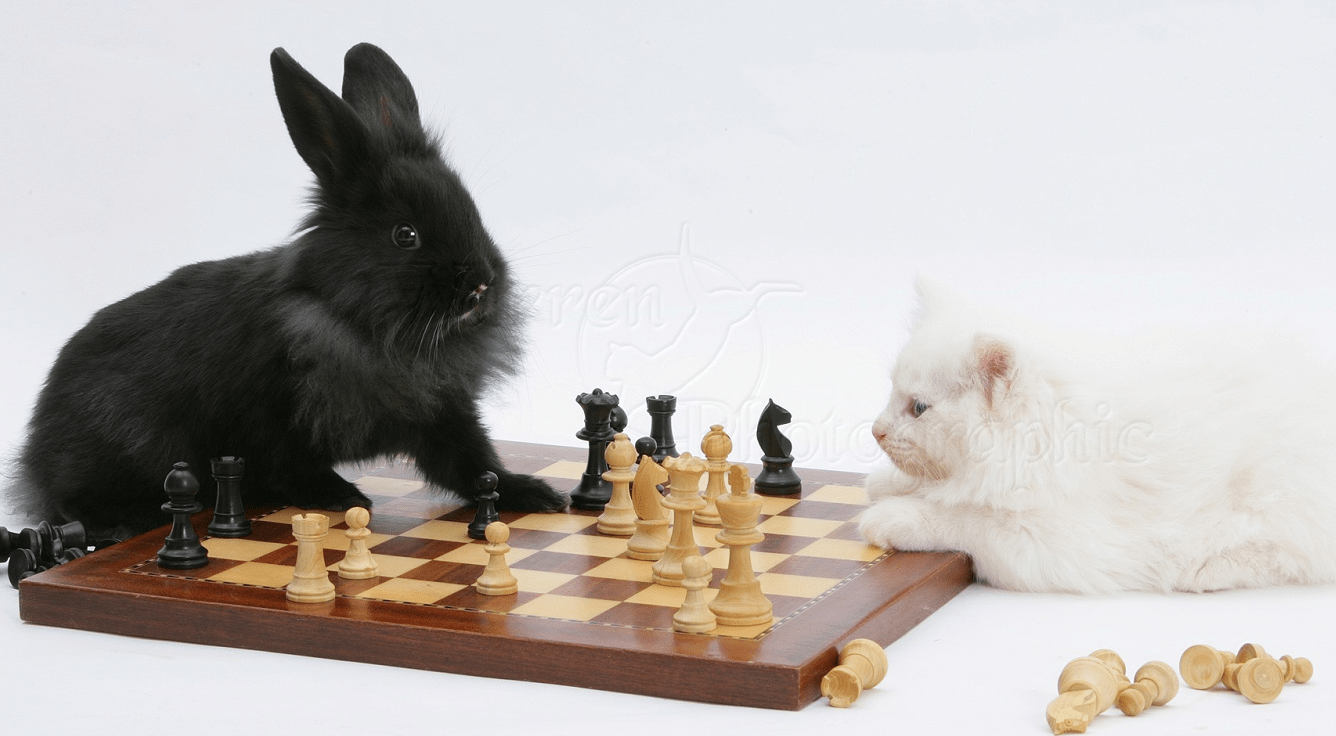 Chess.com Spoke, and I Listened!!!: Heeding Advice On Chess Content